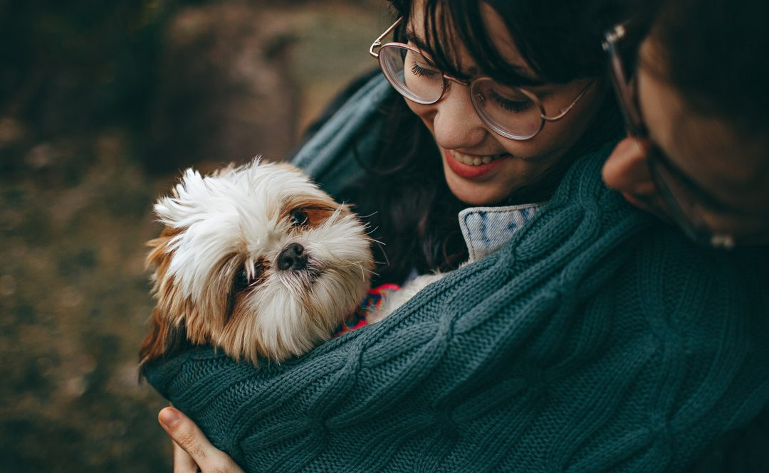 Are Shih Tzus Good with Kids? A Guide for Parents