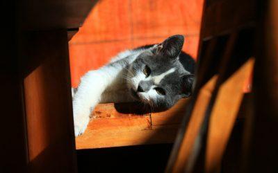 Behavior analysis for your cat training
