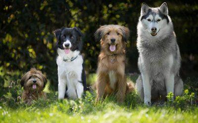 How to Housetrain and Potty Train Any Dog