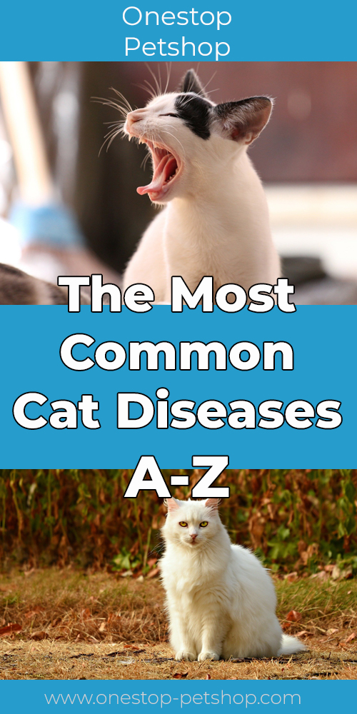 The Most Common Cat Diseases A-Z