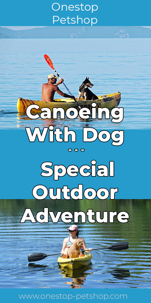 Canoeing With Dog – Special Outdoor Adventure Pinterest