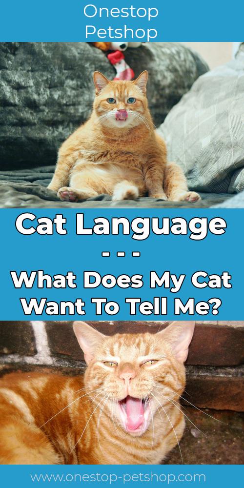 Cat Language Pinterest