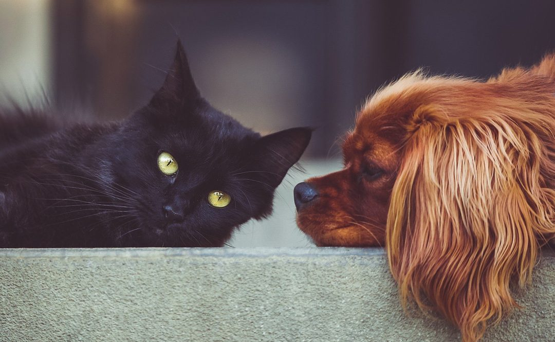 How to get dog and cat used to each other – Practical Tips