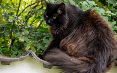 Change of territory – Moving with your cat
