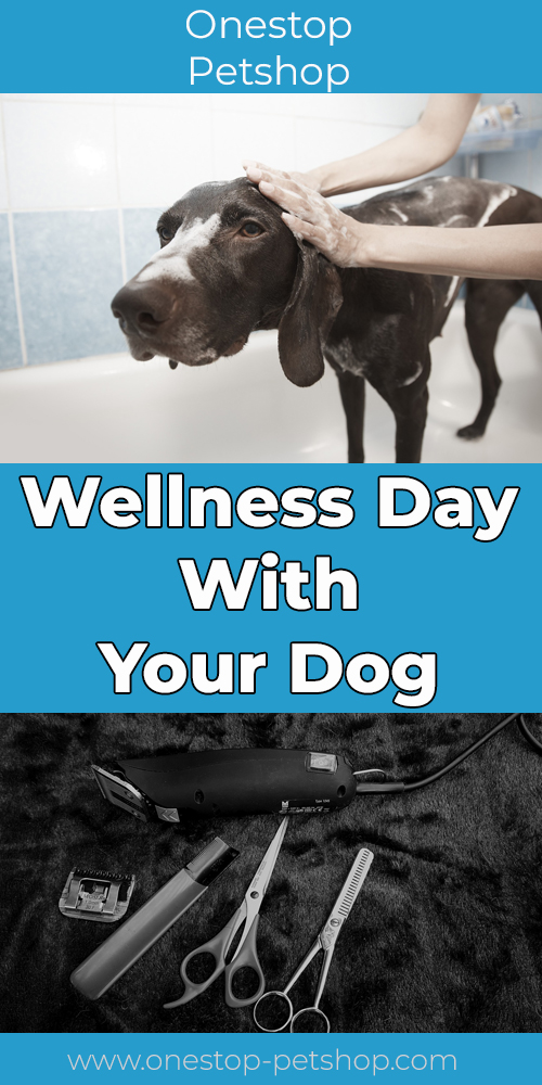 Wellness Day With Your Dog Pinterest
