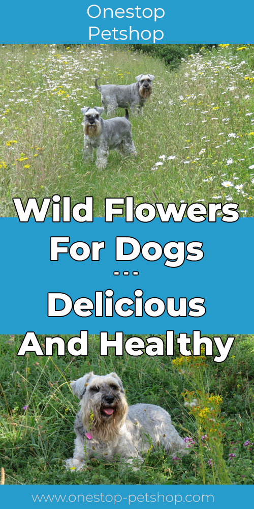 Wild Flowers For Dogs – Delicious And Healthy Pinterest